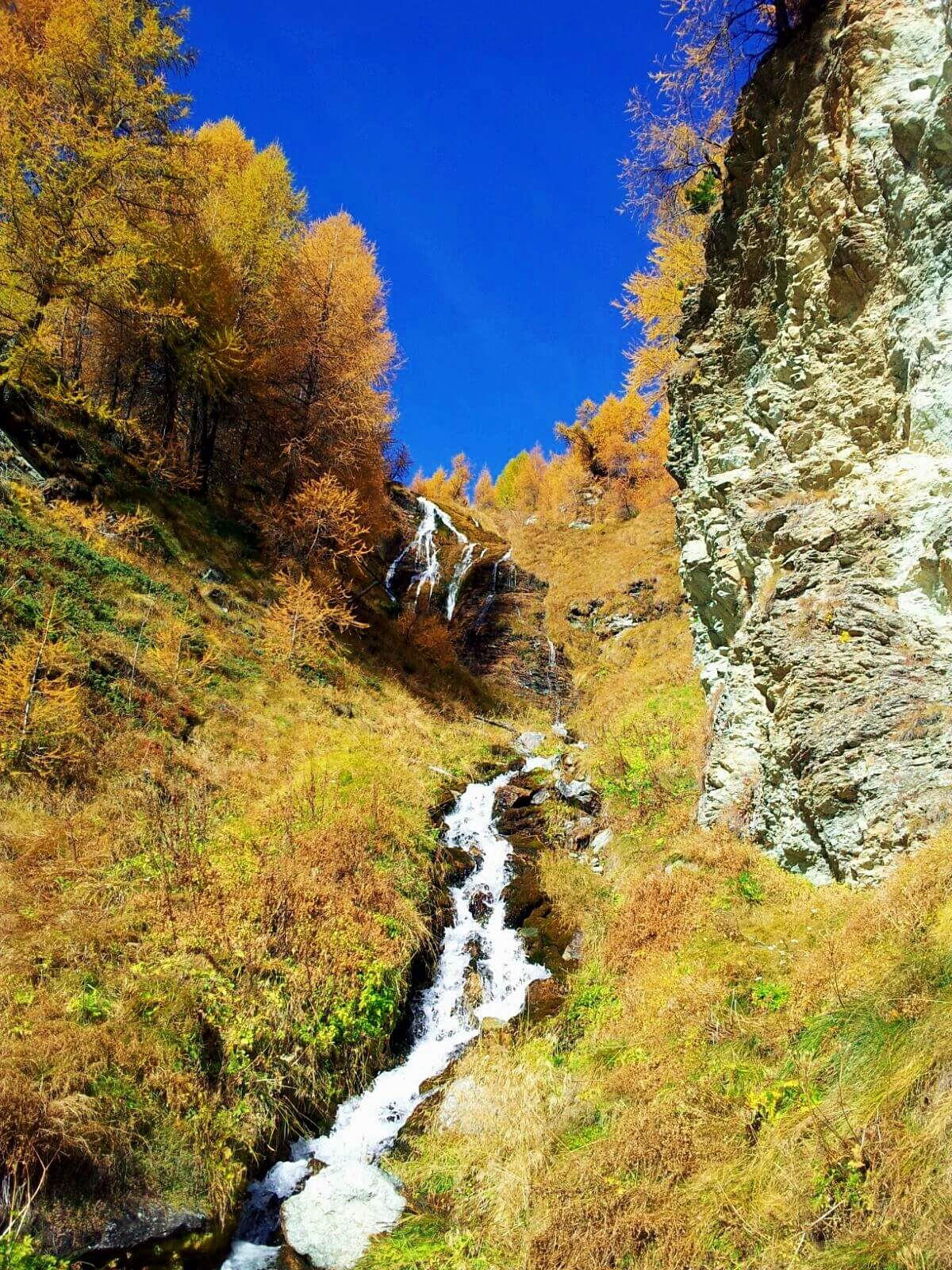The Engadin is a hiker's paradise during the time of the golden forests.